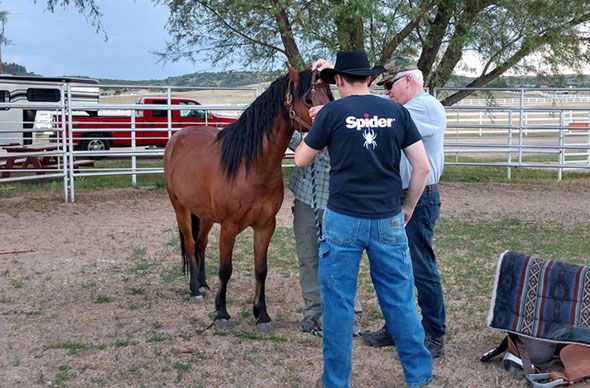 veterans-working-with-horse-therapy